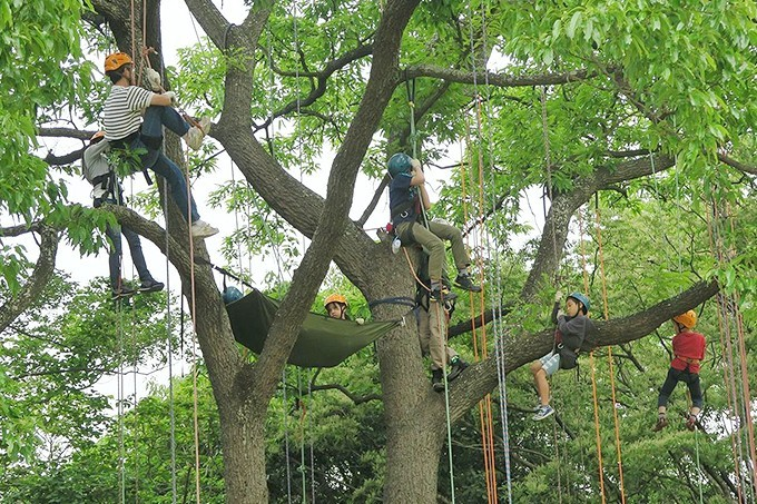 treeing
