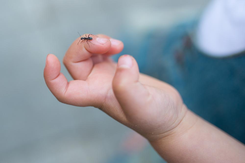 虫の命を考える