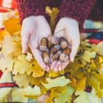 【保育士が教える】秋を今よりもっと楽しめる!「どんぐり」の処理方法と楽しみ方