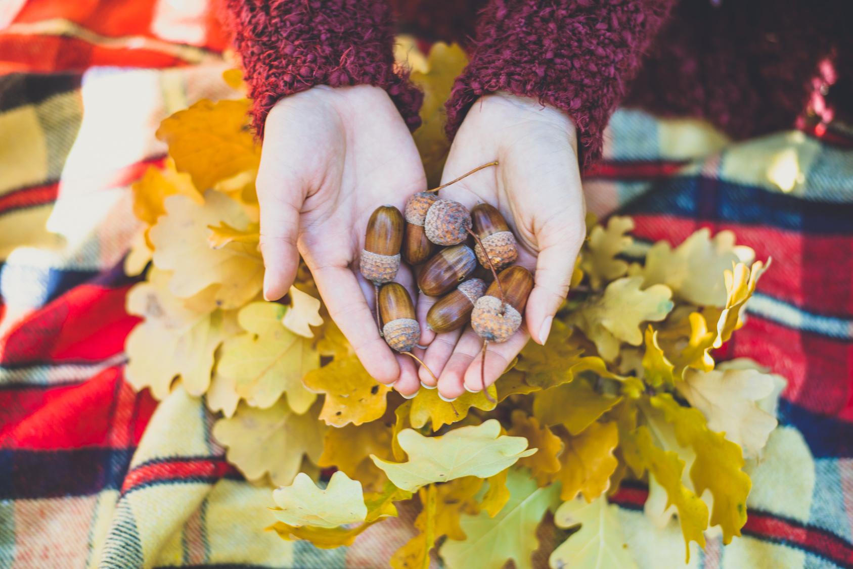 秋といえばどんぐり