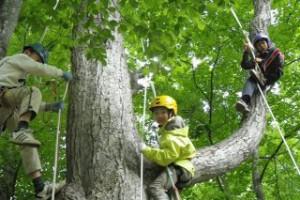 treeing_160723-03-320x213